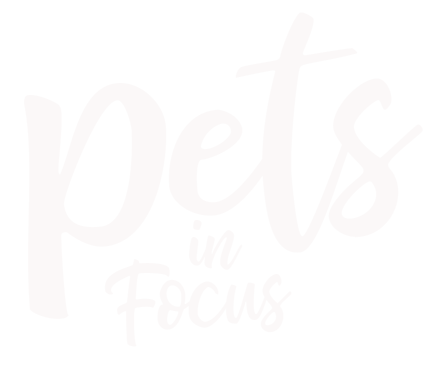 Pets In Focus Photography, LLC