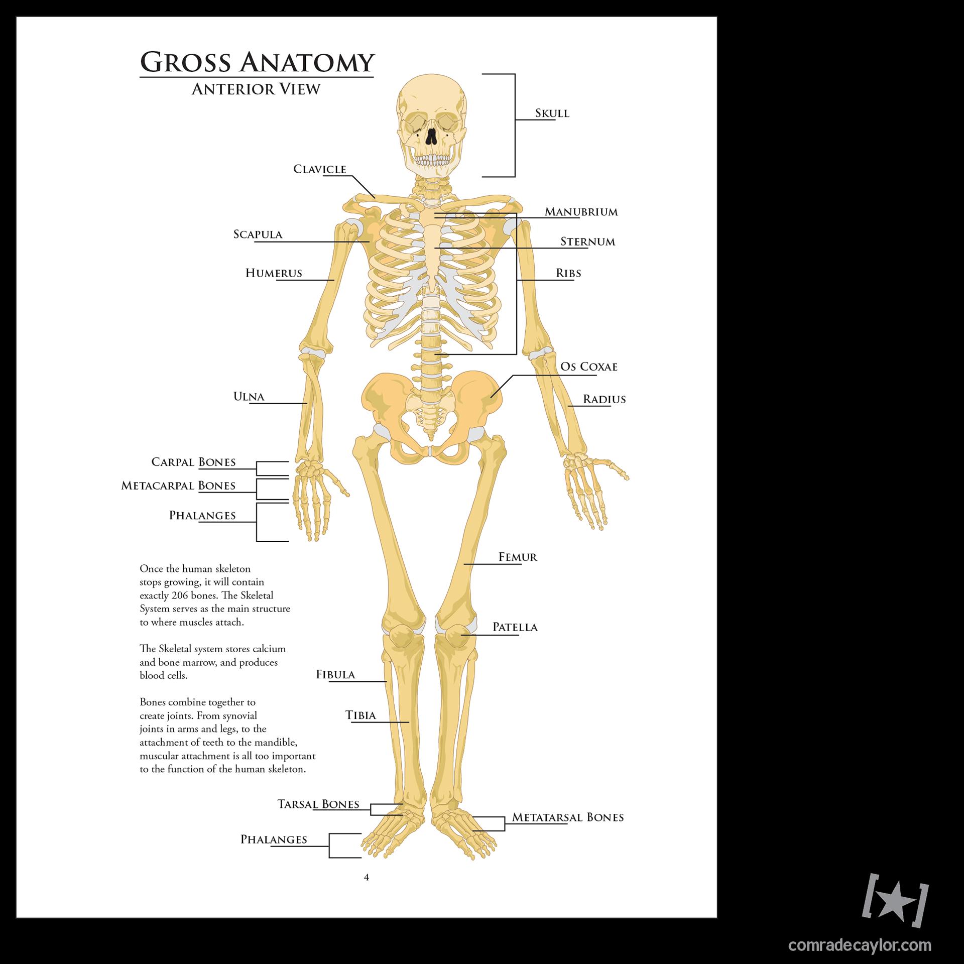 Comrade Caylor Human Anatomy Study Guide 2013