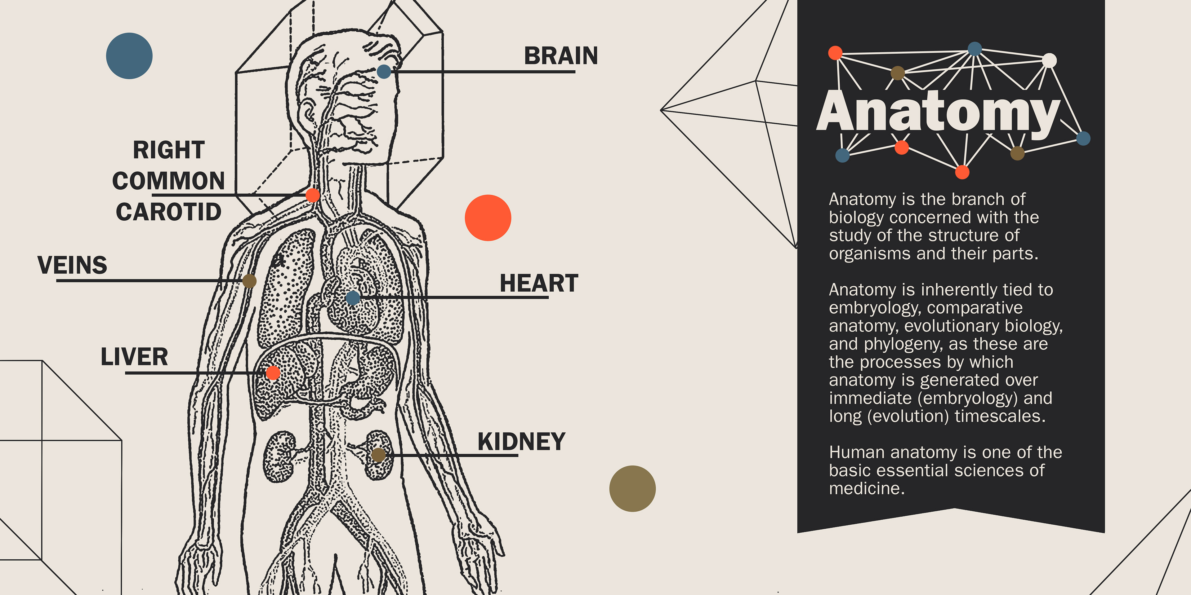 Comparative Anatomy Evolution Images Human Anatomy Diagram Organs