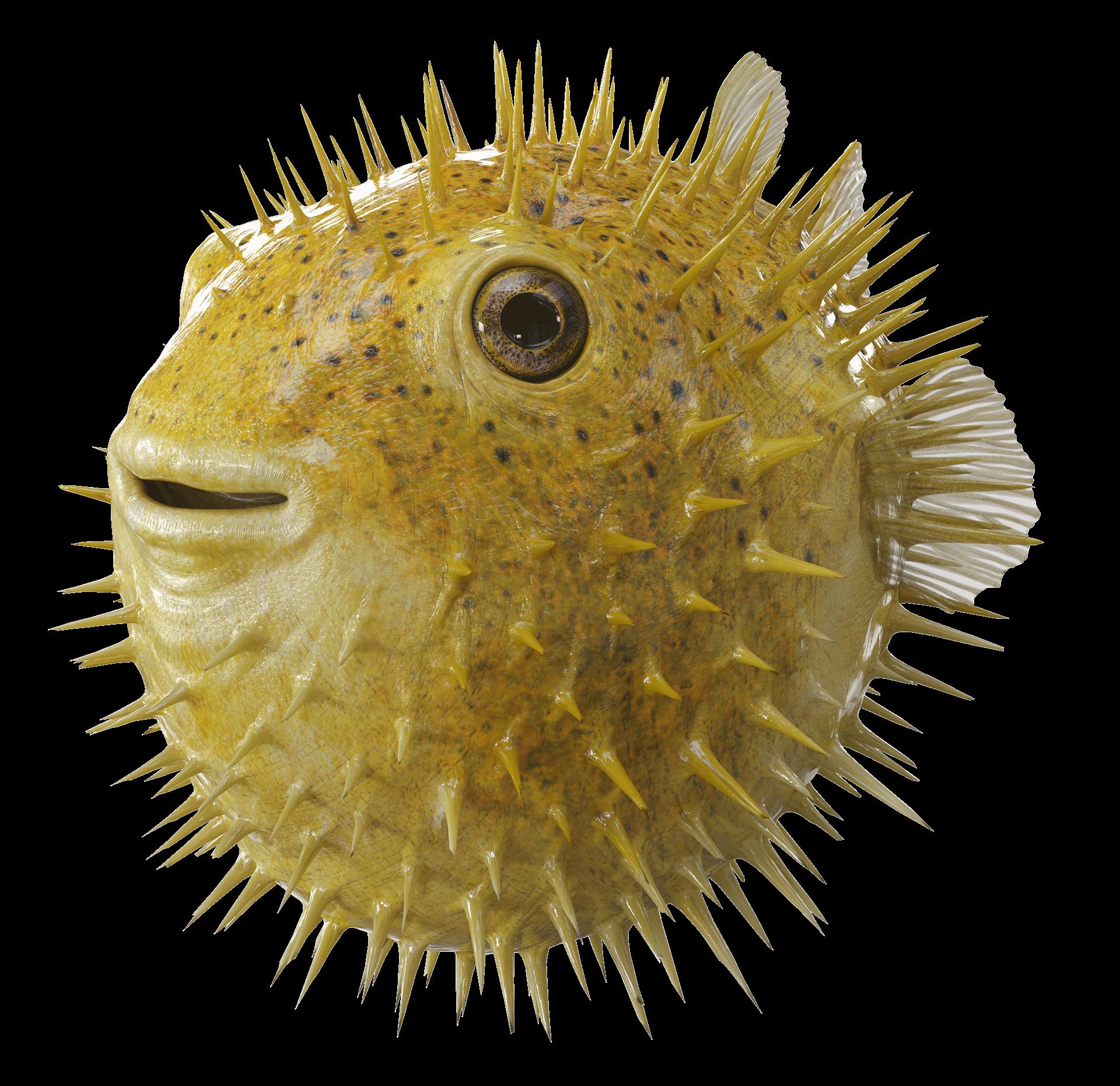Rur Postproduction Raiffeisen Bank Puffer Fish