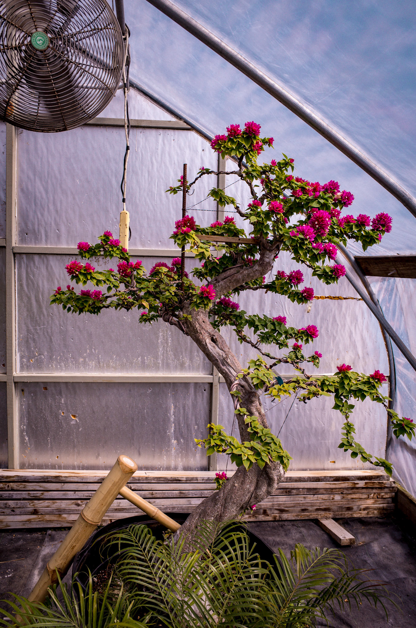 Pan Ousley Photography New England Bonsai Gardens