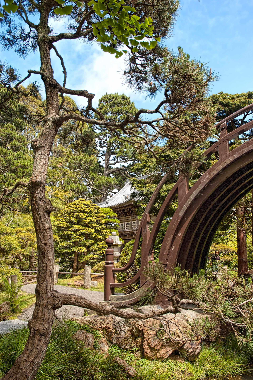 Ali Khan Portfolio - Japanese Tea Garden