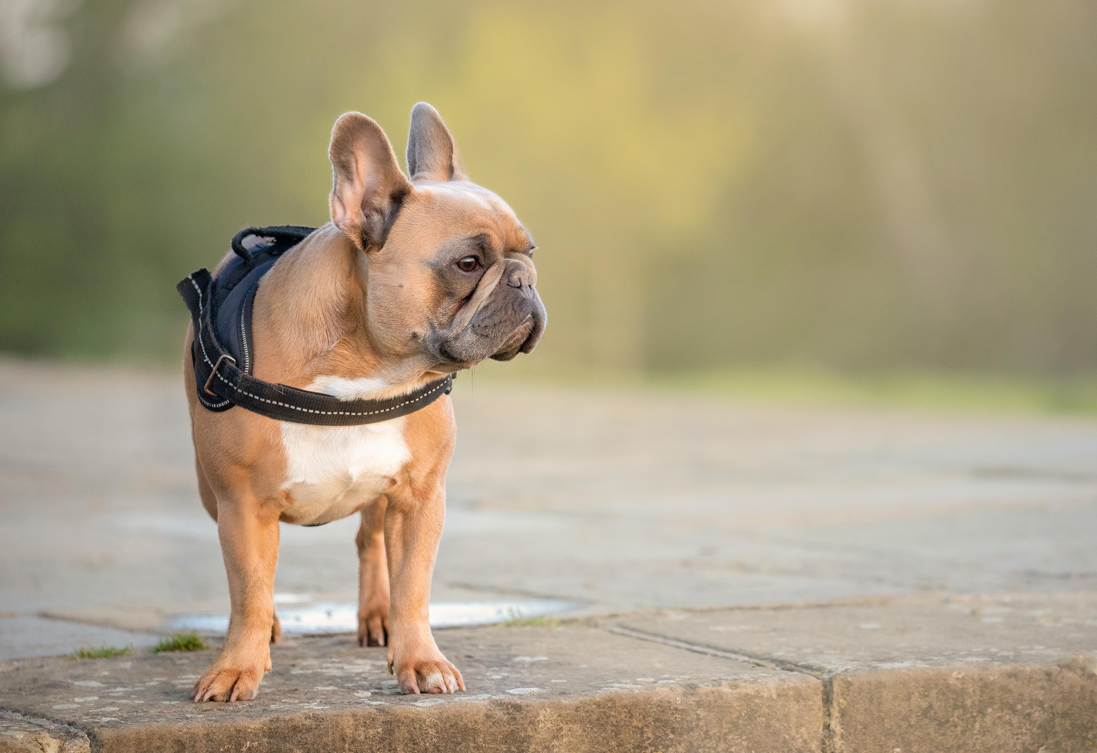 Jenny simpson dog