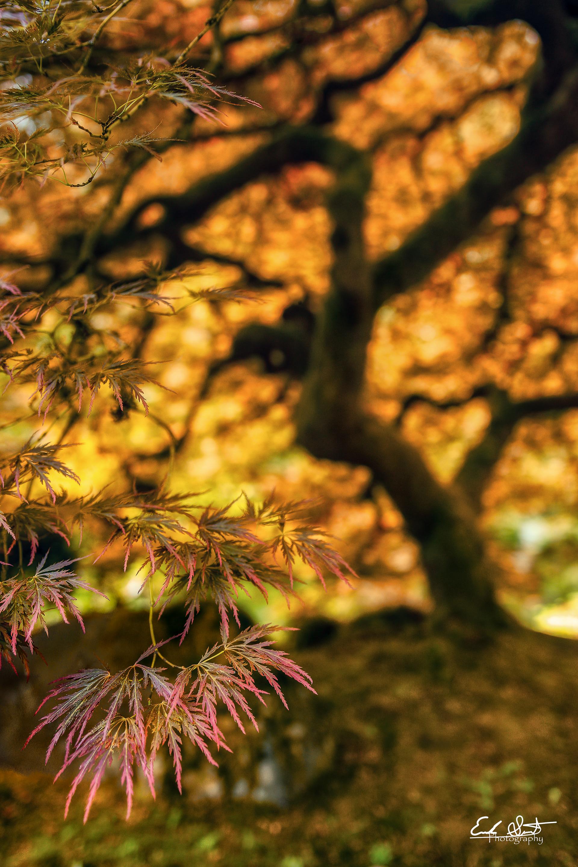 Erik Strot - Portland Japanese Gardens