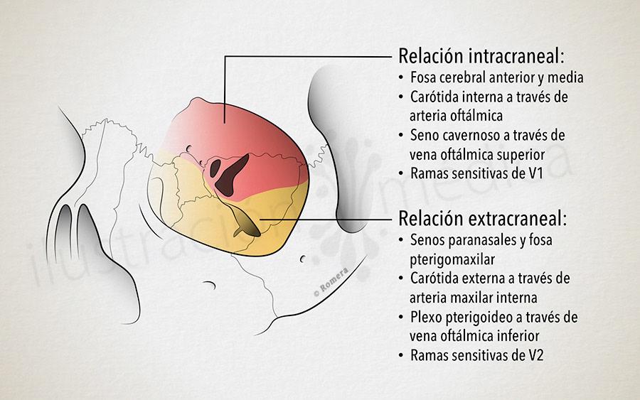 Manuel Romera, medical illustrator - Anatomía Orbitaria