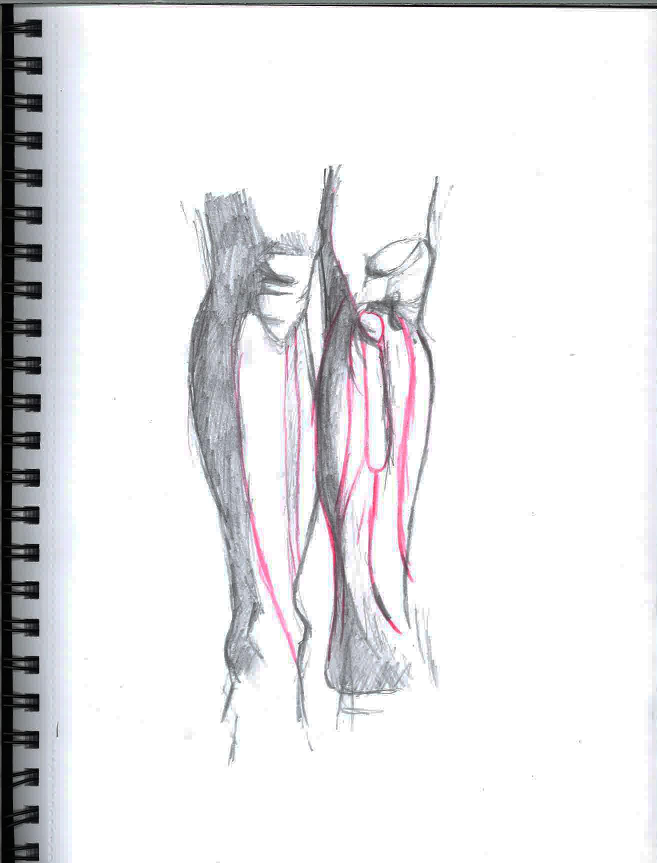 Katy days portfolio - Anatomy - knees and lower leg
