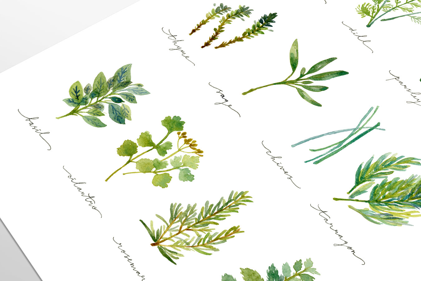 Jessica andriany hartono portfolio culinary herbs watercolor material watercolor ink on cold press watercolor paper prints are available on my etsy shop here is the direct link sciox Image collections