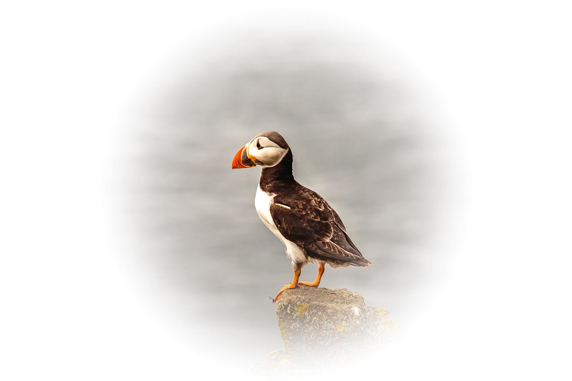 dc wildlife co uk