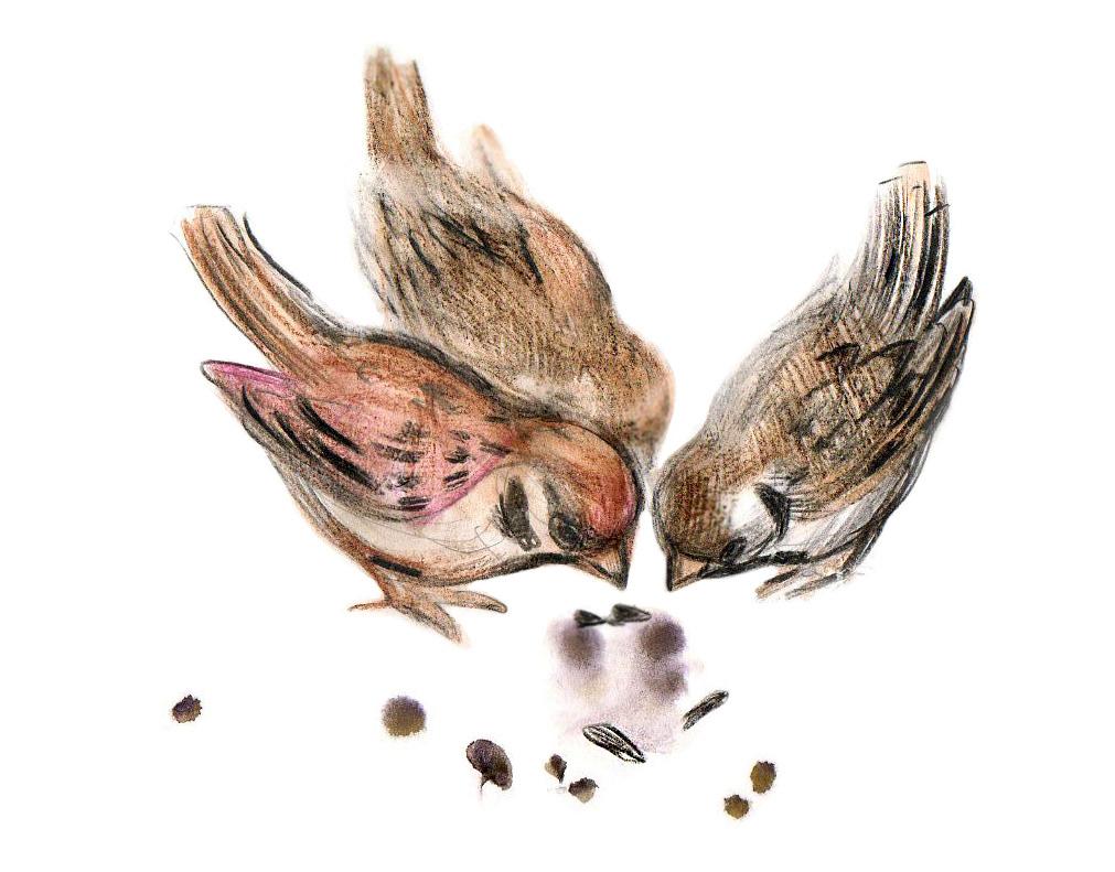 Картинка птичка клюет зернышко